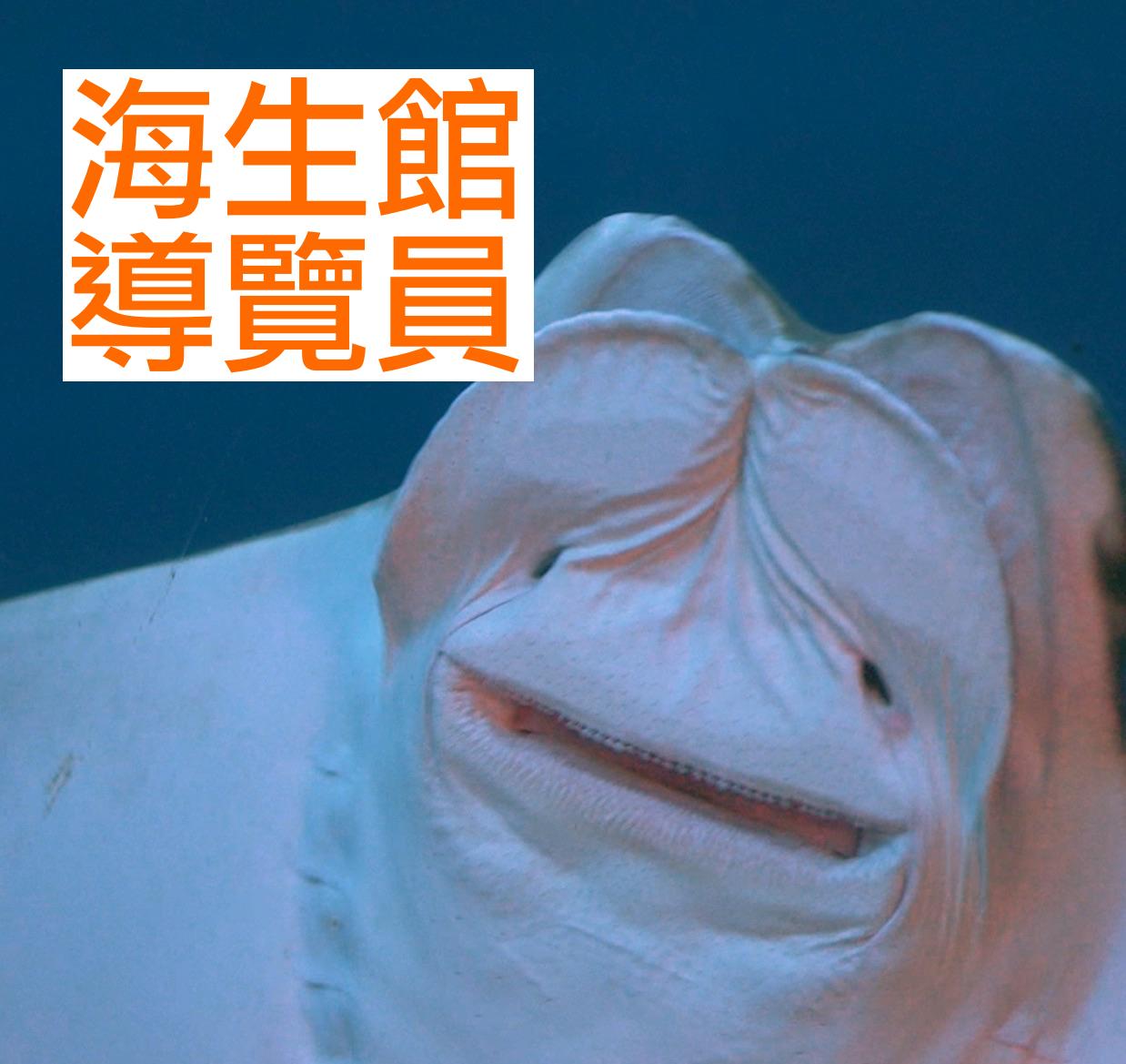 海生館導覽員_屏東國立海洋生物博物館|賈伯斯時間-職場達人的一天