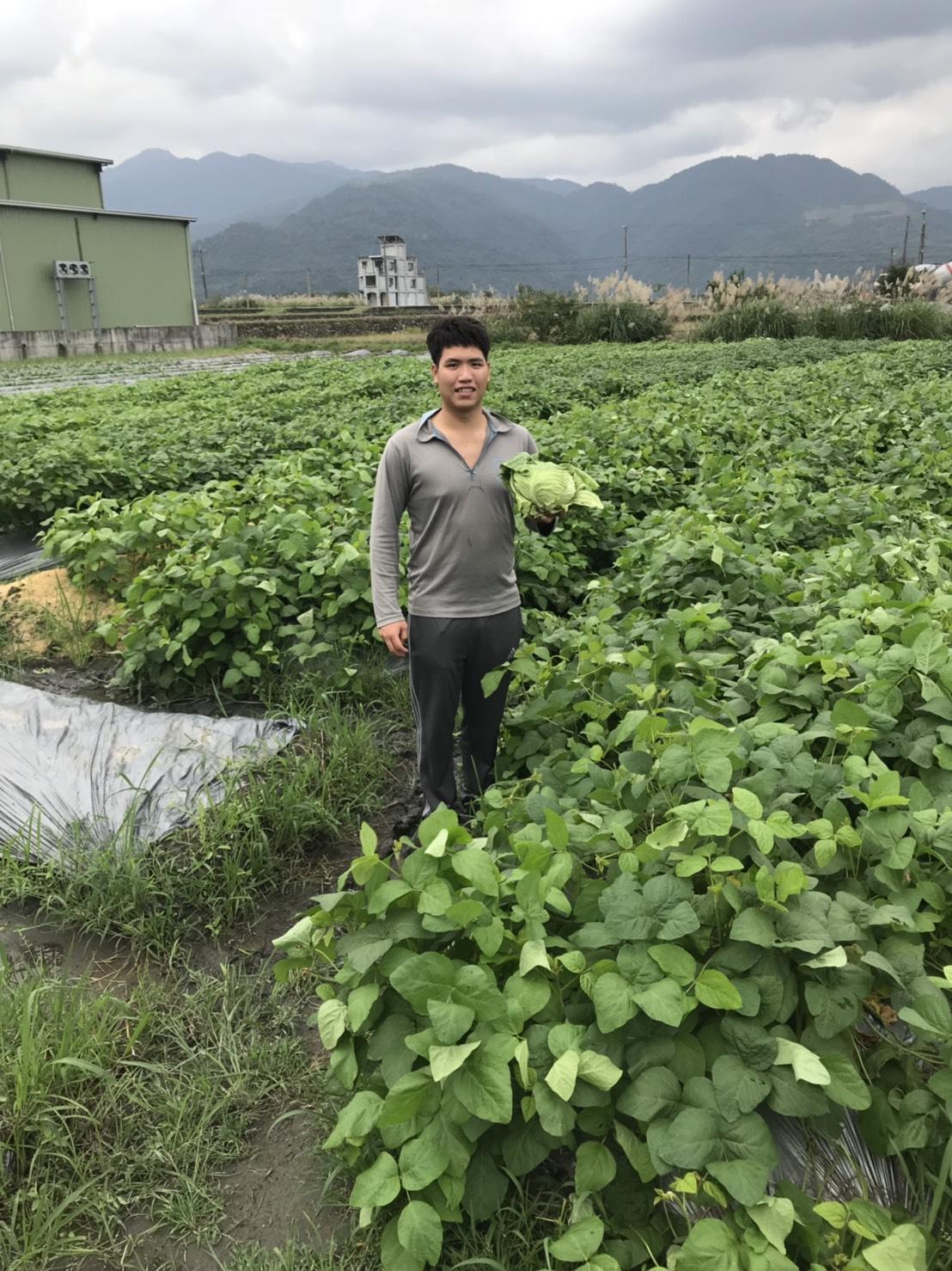 吳旻恆返鄉從農,跟父母學習種植稻米、黑豆等作物。