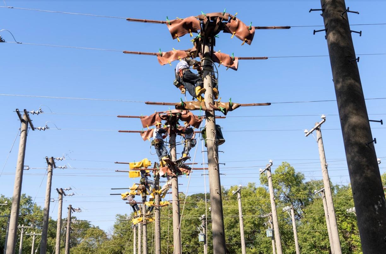 ▲台電5月再招766名僱用人員,其中配電線路維護類265名為員額最多的類別。